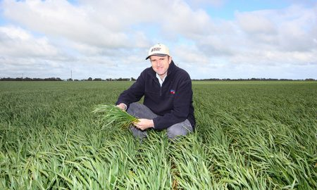 Pacific Seeds Wheat Varities VIC