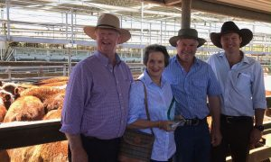 Herefords-champion-pen-NSW