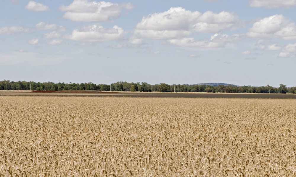 another-wheat-field