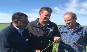 GRDC Western Region Panel chair Darrin Lee with Department of Primary Industries and Regional Development researcher Kith Jayasena, left, and South Stirling grower Mark Slattery, right. Image courtesy of GRDC