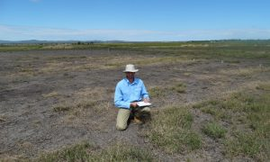 Jeff Werth (DAF) collecting data at the patch eradication trial at Hermitage Research Facility, Warwick. The dense patches of awnless barnyard grass seen in this image are the glyphosate-only treatments.