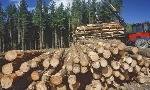 forestry plantation stock image