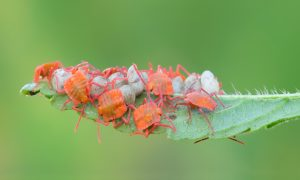 stink bugs stock image