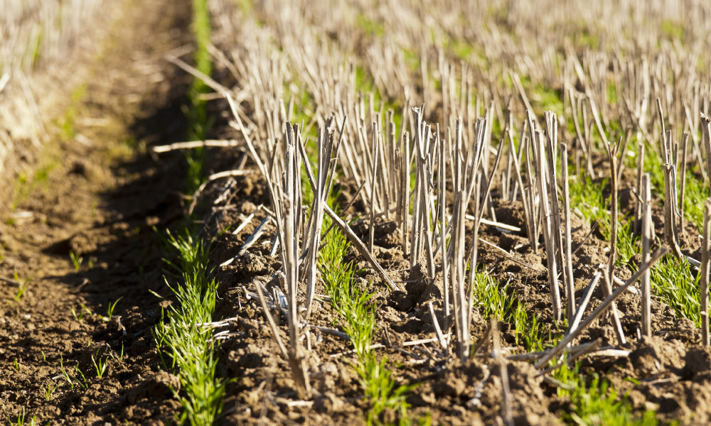 GRDC high rainfall zone workshops in WA will extend outcomes from national and regional projects that have GRDC investment. Photo: Catherine Norwood / © GRDC