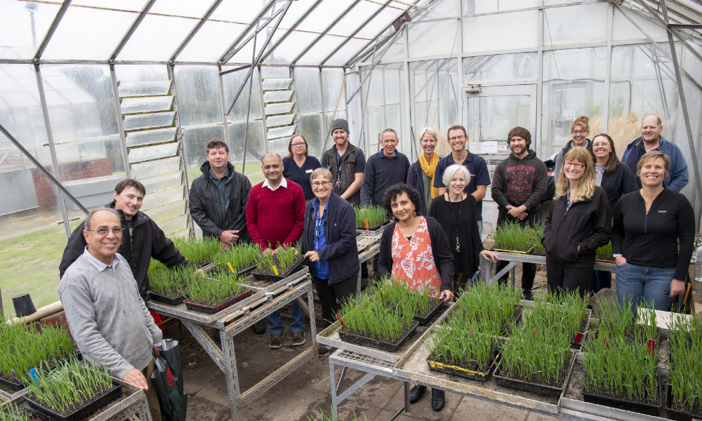 DPIRD senior plant pathologist Dr Manisha Shankar (centre) and team involved in a five-year GRDC NVT investment looking at disease resistance across a broad range of crops.