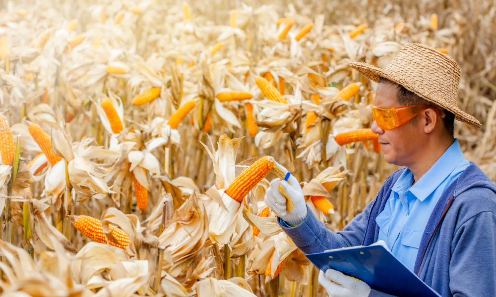 grains report stock image