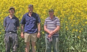 Farm worker James Reddish, Wetsern Ag agronomist Brendan Smith and farmer Graeme Ford.