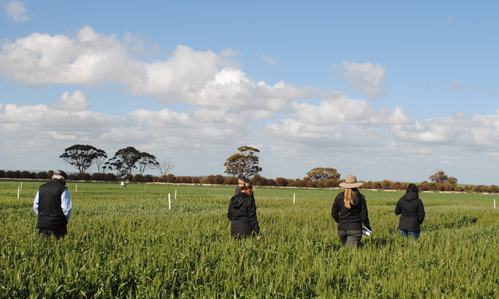 GRDC Western Region Panel members and staff inspect frost trials at Quairading during the GRDC Western Region Panel tour of the Avon region in 2018.