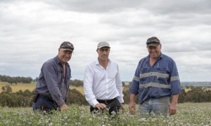 Tedera Grazing Success - Richard Brown, Daniel Real, David Brown (A4441943)