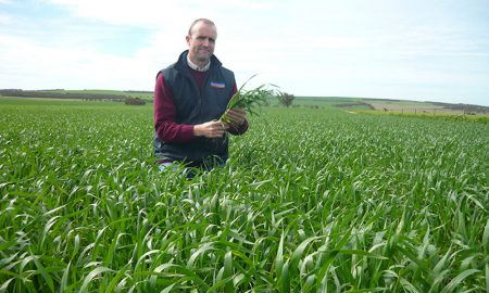 Pacific Seeds Wheat Variety QLD